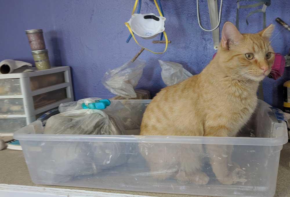 Max the studio cat